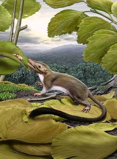 """A tiny theoretical creature dubbed the ""hypothetical placental mammal ancestor"" is stealing the hearts of some evolutionary biologists — and annoying others — as it raises new debate over just when our early mammal ancestors began diversifying across the globe."""