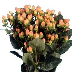 Hypericum Berries Peach would be a good filler flower