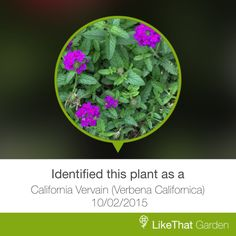Plant identified instantly with LikeThat Garden