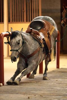 Selected Akhal-Teke horse pictures from all over the world. Have more fun with nice pics and videos of awesome Akhal teke horses. Most Beautiful Animals, Beautiful Horses, Beautiful Creatures, Quarter Horses, Horse Photos, Horse Pictures, My Horse, Horse Love, Yorkies