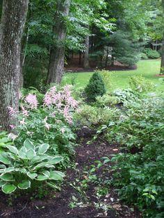 Smooth hydrangea straight species Garden Ideas