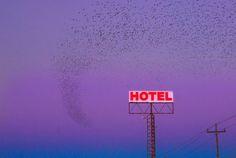 #sky #sunset #hotel #fly #birds
