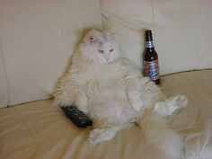 """Hurricane Irene ..... I challenge you to get between my tv and my """"beer"""", which for me would be coke. LOL!"""