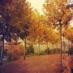 enchanting autumn