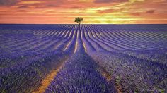Lavender Field - a wonderful Sunrise near Valensole