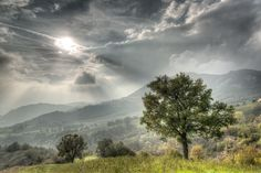 https://flic.kr/p/sWTyRc | Lonely Tree - Carpineti (RE) Italy - October 19, 2015 | Handheld HDR