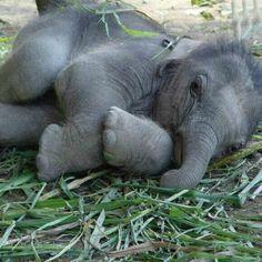 Sleepy tyke