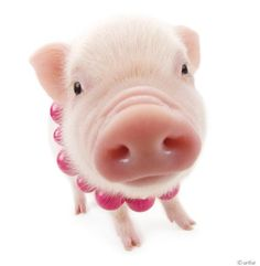Artlist Collection THE PIG — Think Pink!
