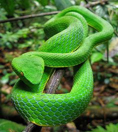 Now the serpent proved to be the most cautious of all of the wild beasts...that Jehovah God had made.   -  Genesis 3:1