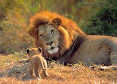 Lo mas hermoso de la naturaleza :) - Megamegapost :)
