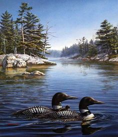 This loon family by Meger is enjoying the morning in the peaceful waters, Their are some camper down the lake a ways put both the loons and the campers seem unaware of each other Image Size 15.5 x 18