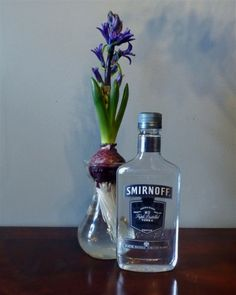 This tip could have saved the paper whites I gave at Christmas from flopping all over the windowsills. Mix vodka 1 part to 7 parts water. Read more in this article.