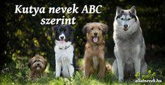 Kutya nevek ABC szerint - Állatnevek Basset Hound, Cavalier King Charles, Yorkshire Terrier, Husky, Fragile, Dogs, Animals, Toy Poodles, Hip Dysplasia