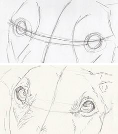 drawing dog eyes