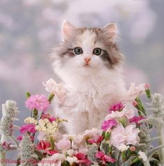 Simple Tips To Help You With Cat Care. When cats aren't sleeping, they have to do something to pass the time. If left unchecked, cats tend to climb on furniture and scratch your belongings. Pretty Cats, Beautiful Cats, Animals Beautiful, Cute Little Kittens, Kittens Cutest, Pink Flower Photos, Gato Anime, Kitten Images, Cat Flowers