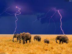 elephants | Comments for Five elephants family HD wallpaper