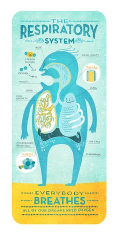 Educational infographic & Data The Respiratory System: Anatomy Print. Image Description The Respiratory System: Anatomy Print Science Biology, Teaching Science, Life Science, Medical Science, Science Education, Science Cartoons, Medical Coding, Science Art, Respiratory System Anatomy
