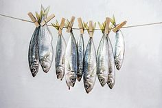 Time and order | Fishy still life | James Hughes (lost parables) | Flickr