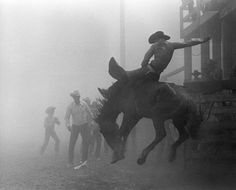 Louise Serpa :: Sweetheart of the Rodeo :: NY Times