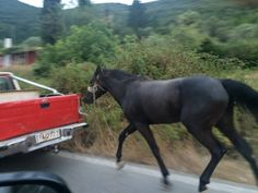 Prosecute Man For Dragging A Horse Behind A Moving Car! | PetitionHub.org