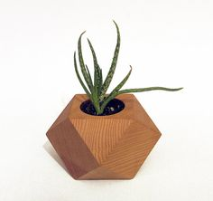 Geometric wood succulent holder wood air plant by RongDesigns