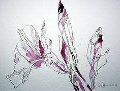 Pinfarbende Blume (c) Zeichnung von Susanne Haun