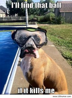 Why You Will Never Want To Swim In A Pool Again