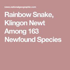 Rainbow Snake, Klingon Newt Among 163 Newfound Species