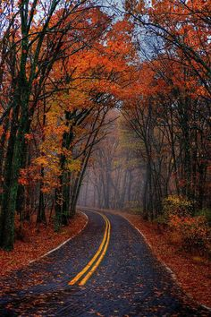 Autumn -- I took the one less traveled ...