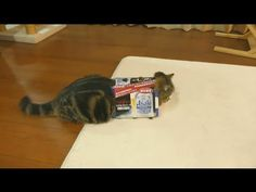 Of Course Maru Gets Into the Box