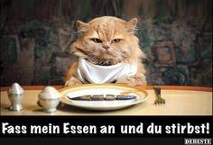 Fass mein Essen an und.. | Lustige Bilder, Sprüche, Witze, echt lustig