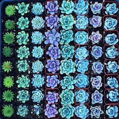 succulents //