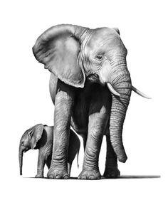 Framed print-black /& white pride des éléphants photo wild animale africaine art