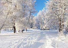 Drzewa, Śnieg