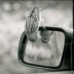 Image in Fotografia em preto e branco/Photography black and white collection by Valentina Venceslau Hello Beautiful, Beautiful Birds, Animals Beautiful, Beautiful Pictures, Funny Animals, Cute Animals, Animal Memes, Baby Animals, Photo Animaliere