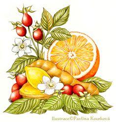 Mixed herbs (ginger, rose hip, orange)