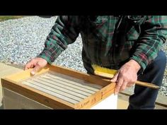 FatBeeMan 1-Minute Tip -How to Dust your bees