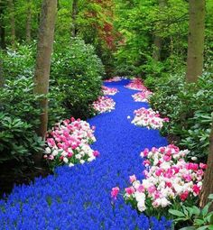 "Enchanting flower path. Needs a sign - ""Don't tread on me"""