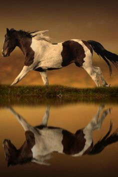 Reflection - title The Horse's Journey - by Jenny Woodward