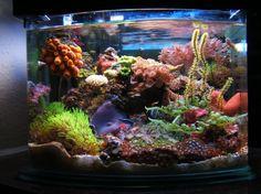 My 3 gallon saltwater aquarium. #aquarium