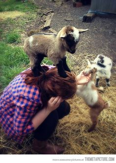 baby goat conquers human
