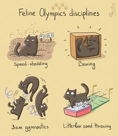 Feline Olympics disciplines