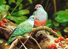 birds-3 (605x439, 60Kb)