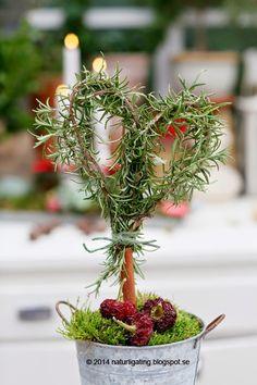 Rosemary topiary - Naturliga Ting Garden Blog
