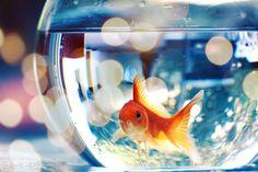 Gold fish :)
