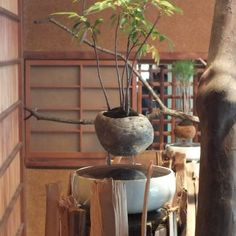 feel-feel-bonsai-en-ete-9