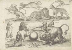 Michael Snijders | Studieblad met tekenvoorbeelden: diverse dieren, Michael Snijders, 1610 - 1672 | Eenentwintigste prent uit een serie tekenvoorbeelden van onbekende omvang. Studieblad met diverse dieren: vier leeuwen, een beer, een vis met haak door de kieuwen, een zeehond en zeerob, een Amerikaanse Zwarte Eend en een luipaard .