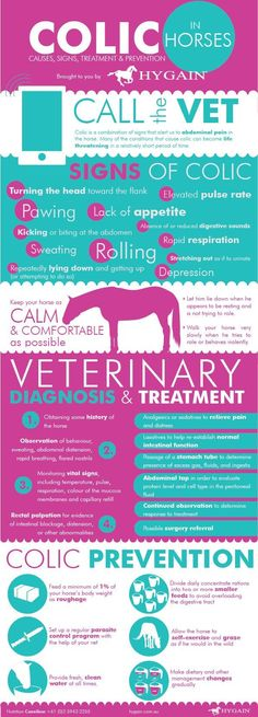 """**FREE Equine Colic Fact Sheet** The term """"colic"""" strikes fear among us all, rightful so, as the incidence of colic in the general horse population has been estimated between 10 and 11% per year.  Among domesticated horses, colic is a major cause of premature death and a recent study revealed colic was second only to old-age as the leading cause of death in horses. A condition we all must take very serious! Download your free fact Sheet now!"""