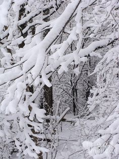 Winter Storm... while I'm glad spring seems to finally have arrived, I will miss these types of scenes for the next few months