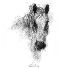 Fine Art Drawing, Art Drawings, Connemara Pony, Sketch A Day, Shop Art, Surface Design, Uk Shop, How To Draw Hands, Sketches